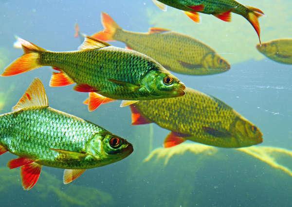 los peces en el rio letra completa villancico